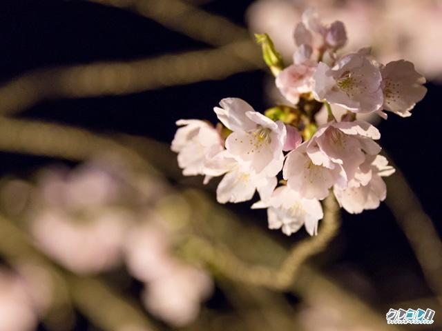 醍醐寺の夜桜