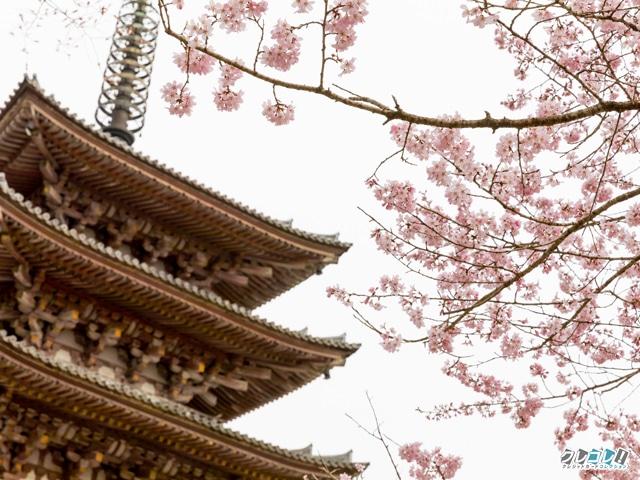 醍醐寺 伽藍 五重塔付近