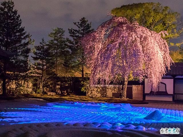 高台寺の桜(シダレザクラ)