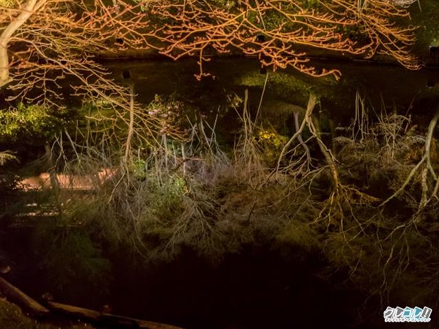 池に反射する木